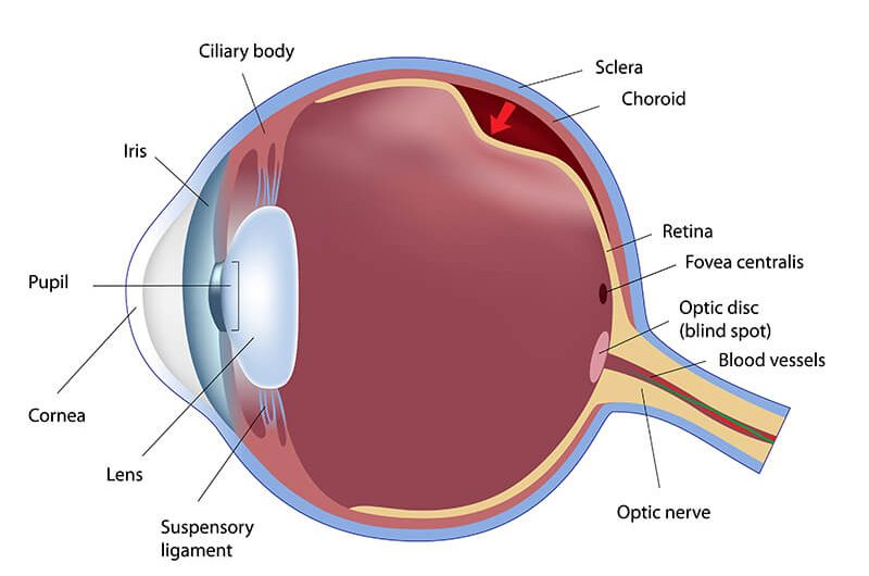 The 3 Commonly Misdiagnosed Retinal Conditions